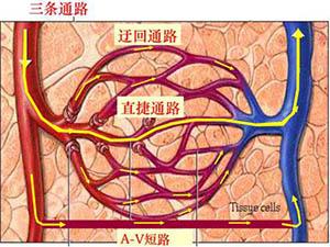 骨骼肌炎癥灶血液流變的變化及低剪切力環境