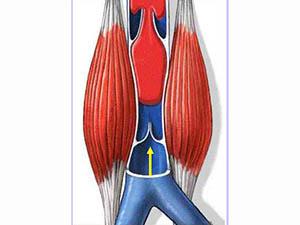 靜脈瓣與恒怡運動促通血液機理