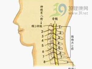 頸椎結構簡介
