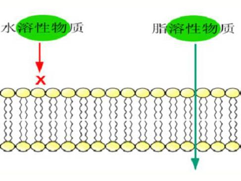 科學發展的歷程與細胞膜結構的各種學說